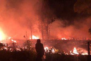 Kiên Giang: Đang truy tìm thủ phạm đốt rừng quốc gia Phú Quốc