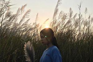 Cánh đồng lau giữa lòng Hà Nội, điểm check-in đẹp như phim Hàn