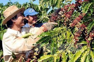 Khai phá tiềm năng xuất khẩu sang Algeria