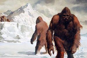 Lời giải quá choáng về sự tồn tại của quái vật Bigfoot