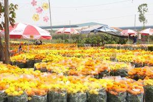 TP.HCM tổ chức Hội Hoa Xuân, chợ hoa tết ở nhiều công viên lớn