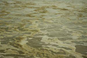 Vụ nước biển đổi màu tại Quảng Ngãi: 1/4 mẫu nước biển có độ pH vượt mức cho phép