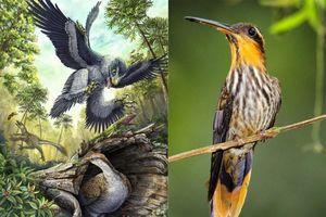 1001 thắc mắc: Vì sao chim không có răng, đậu trên dây điện mà không bị giật?