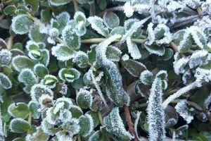 Không khí lạnh đang suy yếu nhưng miền Bắc vẫn có nơi dưới 3 độ C