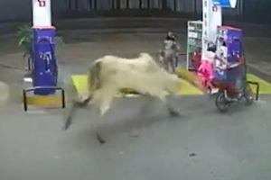 Clip bò tấn công hai người đi xe máy, húc đổ cây xăng