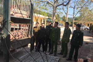 Bắt gần 3 tấn lợn sống xuất lậu Trung Quốc giữa cao điểm thiếu thịt sốt giá