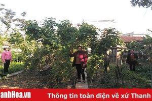 Hiệu quả mô hình 'Nhà sạch - vườn mẫu' ở xã Thiệu Trung