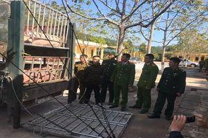 Chặn hơn 2 tấn lợn chuẩn bị xuất sang Trung Quốc