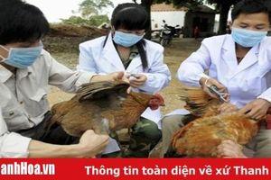 Phân bổ 2 triệu liều vắc - xin cúm gia cầm dự phòng cho các địa phương