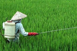 Băn khoăn về trách nhiệm của nhà đầu tư thực hiện tập trung, tích tụ đất nông nghiệp