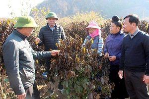 Cảnh báo cháy rừng ở nhiều tỉnh phía bắc