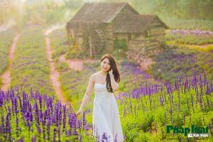 Mê đắm cánh đồng hoa Nữ hoàng xanh như trời Âu giữa lòng Hà Nội
