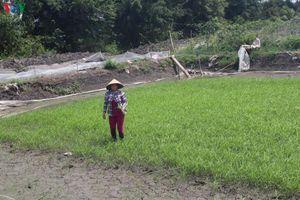 Tiền Giang 'chạy đua' với nước mặn tràn về