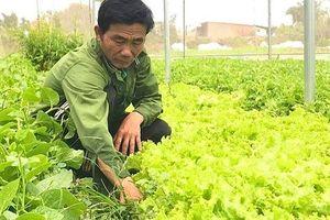 Kon Tum: Rau VietGap 'đói'… thị trường