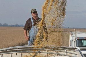 Cam kết tăng mua nông sản Mỹ của Trung Quốc vấp phải nhiều hoài nghi