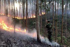 Phú Yên: Truy tố người đàn ông dọn cỏ, gây ra vụ cháy gần 168 ha rừng