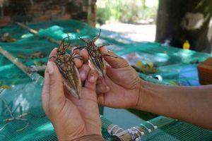 Lạ mà hay: Chăm 5.000 con côn trùng 'thơm lừng', thu 12 triệu/tháng
