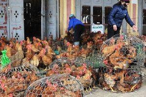 Thịt lợn 'bão giá', thịt bò, gà, hải sản... đồng loạt đắt đỏ ăn theo