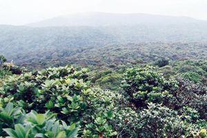 Khám phá Vườn Quốc gia Kon Ka Kinh - 'Nóc nhà của Gia Lai'