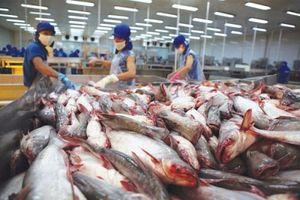 Xuất khẩu sụt giảm, các 'ông lớn' cá tra cũng chật vật
