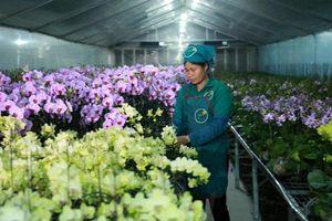 Nông nghiệp Hà Nội: Nhiều mô hình mới, cách làm hay