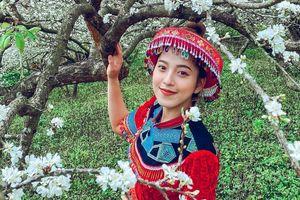 Hoa mận nở sớm, bung sắc trắng khắp thung lũng Mộc Châu