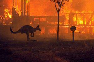 Australia tiếp tục kêu gọi đợt sơ tán mới do cháy rừng