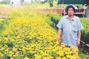 Đến làng hoa Bà Bộ thưởng ngoạn hoa Tết