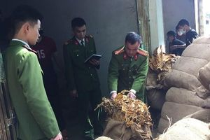 Bắt hơn 40 tấn thuốc lá nguyên liệu nhập lậu ở Cao Bằng