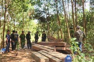 Khởi tố bốn cán bộ Công ty lâm nghiệp Ea Kar liên quan vụ phá rừng quy mô lớn