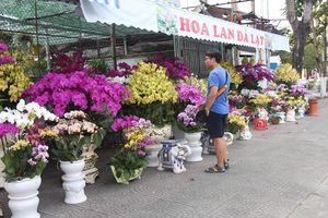 Hoa Tết xuống phố