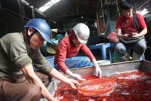 Chợ cá Yên Sở nhộn nhịp trước Tết ông Công ông Táo