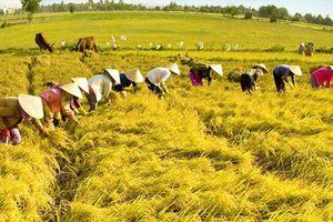 Cà Mau: Hơn 4.000 lao động nông thôn được hỗ trợ nghề