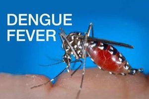 Nghiên cứu đột phá trong ngăn chặn sốt xuất huyết