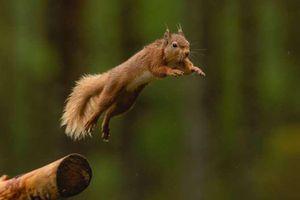 Những 'pha hành động' hoàn hảo của động vật
