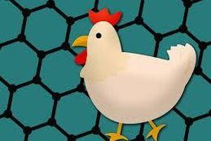 Dùng phân gà để cải thiện thuộc tính của chất graphene