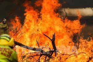 Cháy rừng tại Australia: Chính phủ hỗ trợ ngành du lịch sau cháy rừng