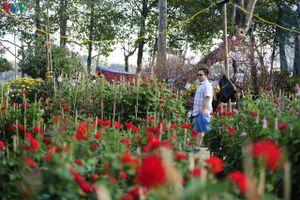 Sắc màu chợ hoa xuân ở Huế