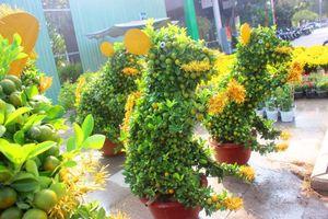Ngắm 'đàn chuột' độc lạ từ quất bonsai