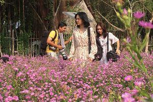 Ùn ùn 'check-in' vườn hoa thạch thảo ở Cần Thơ