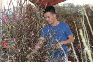 Mùa xuân phương Bắc theo chân hoa đào vào Tây Nguyên