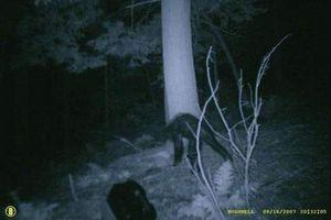 Hình ảnh cực bí hiểm về các loài quái vật