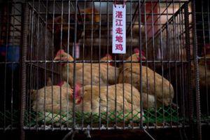 Chợ bán đồ tươi sống - khởi điểm dịch bệnh lạ ở Trung Quốc