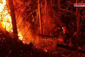 Hơn 2,1 tỷ đồng phục hồi rừng sau cháy lớn ở Hà Tĩnh