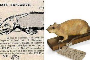 Giật mình vũ khí 'bom chuột' khiến Đức Quốc xã sợ hết hồn