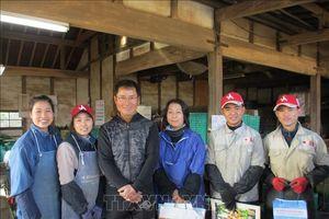 Ibaraki - Điểm đến ưa thích của các thực tập sinh nông nghiệp Việt Nam