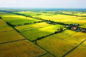 Chuyển mục đích sử dụng đất tại tỉnh Long An