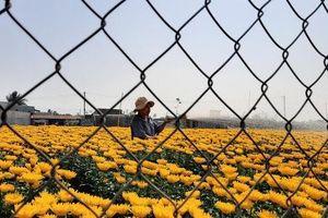Làng hoa lớn nhất Đồng Nai rộn rã ngày cận Tết