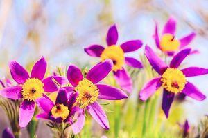 Tử vi ngày 23/1/2020: Tuổi Sửu may mắn bất ngờ, tuổi Hợi dễ gặp đào hoa