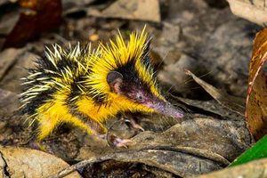 CLIP: Top 10 loài động vật kỳ dị nhất thế giới